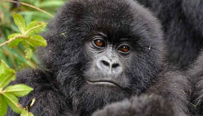 Rwanda Adventure