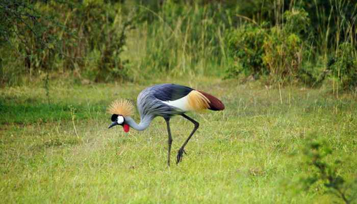 uganda safari holiday,