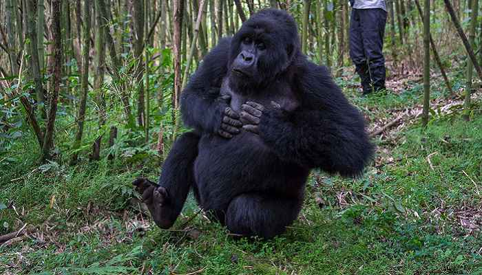 5 Day Discover Rwanda Adventure